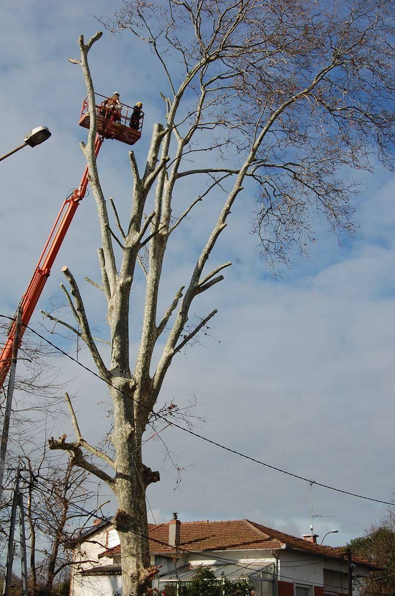 Entreprise d 39 lagage et d 39 abattage d 39 arbre toulouse sud - Entreprise paysagiste toulouse ...